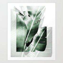 Banana leaf akin Art Print