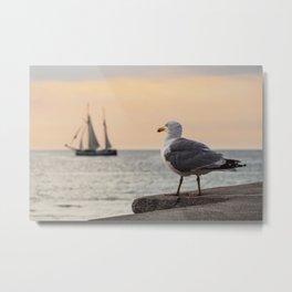 Sea gull and windjammer Metal Print
