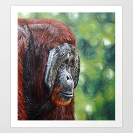 Orangutan Painting Art Print
