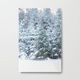 Snowy Evergreen Metal Print