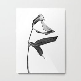 WABI SABI Dead Leaves. Metal Print