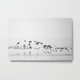 Wading birds in Flight Metal Print