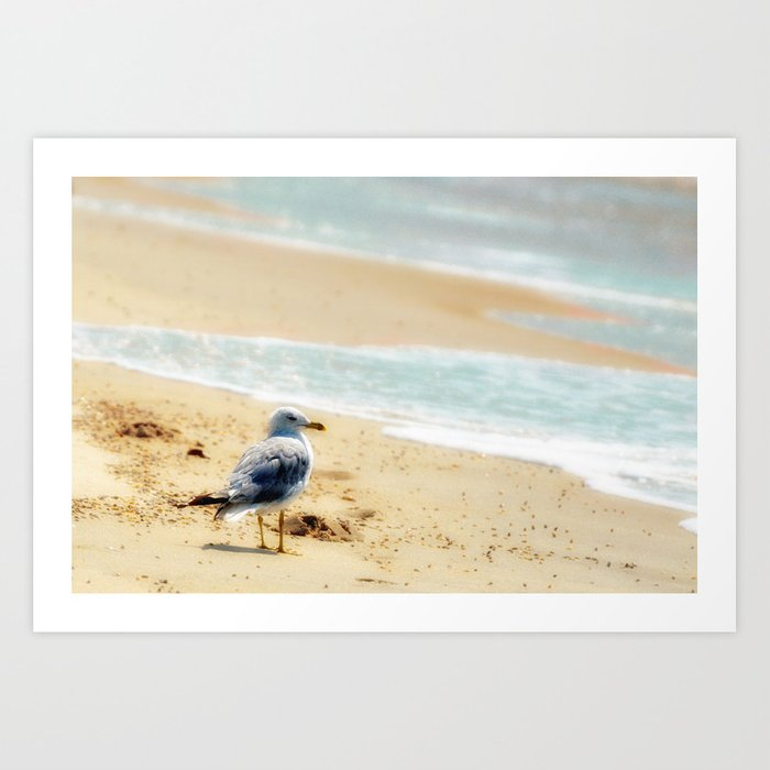 Lonely gull of summer. Art Print