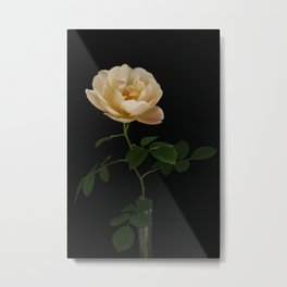 English Rose Collection Metal Print