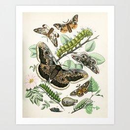Saturnia emperor moths from Schmetterlings buch, 1883  Art Print