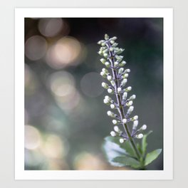 Flower Buds on a Stem Art Print