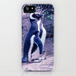 Penguin in Peninsula Valdes - Argentina iPhone Case