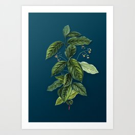 Vintage Broadleaf Spindle Botanical Illustration on Teal Art Print