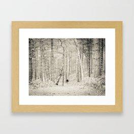 Forest Walk I Framed Art Print