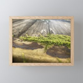 Moss-Covered Wood Framed Mini Art Print