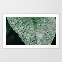 Rain drops on green leaf Art Print