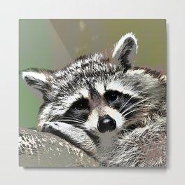 Toony Raccoon Metal Print