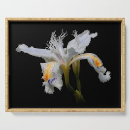 Elegant Iris Japonica / Fringed Iris Flower Serving Tray
