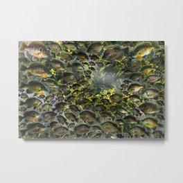 Bluegill Hole Metal Print