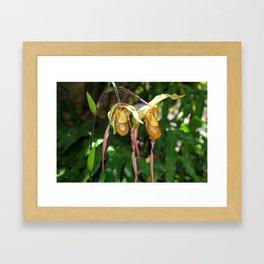 Lady Slipper Orchid I Framed Art Print