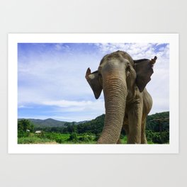 Elephant in Northern Thailand Art Print