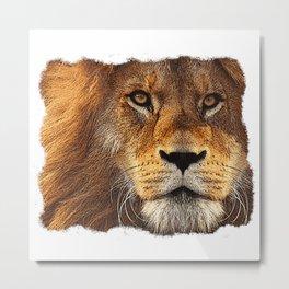 Lion portrait, animals, big cat, lion face Metal Print