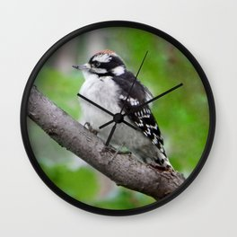Downy Woodpecker (juvenile male) Wall Clock