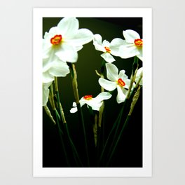 flower dream Art Print