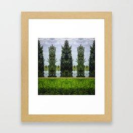 Reflected Pines Framed Art Print