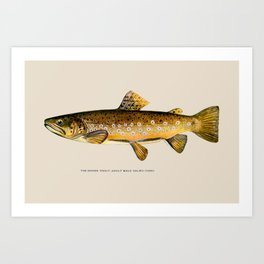 The Brown Trout Art Print
