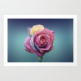 The beauty of a rose Art Print