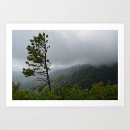 Survival on Brushy Mountain Art Print
