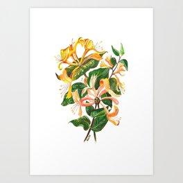 Honeysuckle Bouquet Art Print