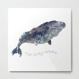Gray Whale Metal Print