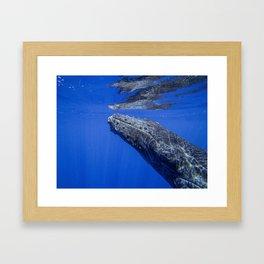 Underwater Humpbacks 13 Framed Art Print