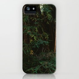Redwood Forest III iPhone Case