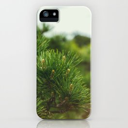 Pine Branch iPhone Case