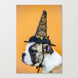 Beautiful Profile of a Bulldog Wearing a Witch Hat for Halloween Canvas Print