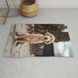 DOG PRINT, DOG Photography, Nursery Animal Print, Dog Printables, Animal Poster, Dog Wall Art, Printable Wall Art, Nursery Decor Rug