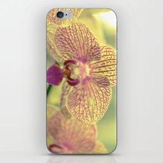Orchid Ⅲ iPhone Skin
