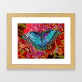 Extreme Blue Morpho Butterfly Framed Art Print