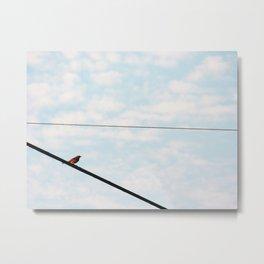 Song Bird 3 Metal Print