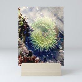 Sea Life Mini Art Print