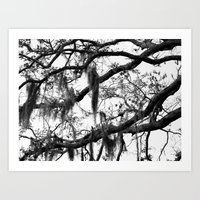 spanish Art Prints featuring Spanish Moss by MorganLoriPhoto