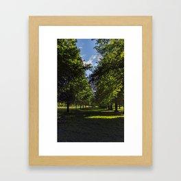 Avenue of trees Framed Art Print