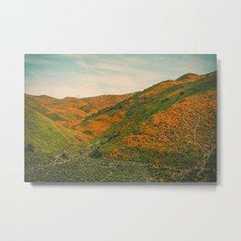 California Poppies 040 Metal Print