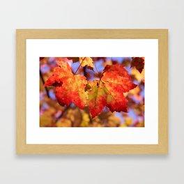 Autumn in Canada - Maple leafs Framed Art Print