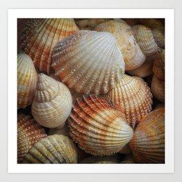 A collection of sea shells Art Print