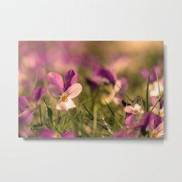 Viola flowers on a meadow Metal Print