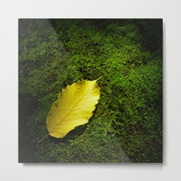 yellow autumn leaf I Metal Print