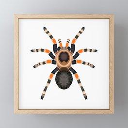Red Knee Tarantula Framed Mini Art Print