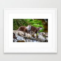 otters Framed Art Prints featuring European Otters by Chris Thaxter