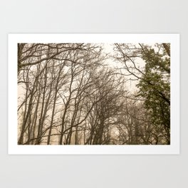 The mist in the forest Art Print