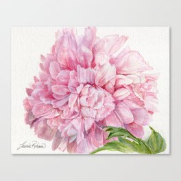 Pink Peony Floral Watercolor Detailed Botanical Garden Flower Realism Canvas Print