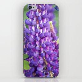 Longwood Gardens - Spring Series 118 iPhone Skin